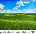 Green grass hills and blue sky landscape 36497281