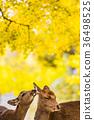 가을, 사슴, 단풍 36498525