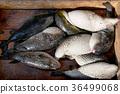 Fresh Puffer fish 36499068
