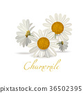 flower, chamomile, style 36502395