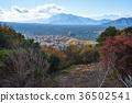 aokigahara sea of trees, autumn, autumnal 36502541