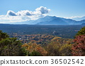 aokigahara sea of trees, autumn, autumnal 36502542