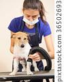 grooming, dog, animal 36502693