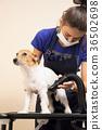grooming, dog, animal 36502698