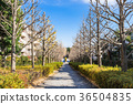 residential area, outskirt, suburb 36504835
