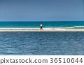 people walking along the seashore 36510644