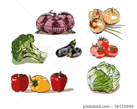 Vegetable illustration vector. Onion, broccoli. 36510999