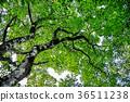 森林 36511238
