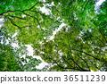 森林 36511239