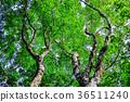 森林 36511240