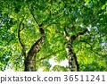 森林 36511241