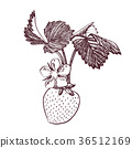 strawberry, vector, fruit 36512169