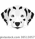 Illustration Dog Dalmatian 36513057