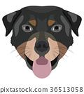 Illustration Dog Rottweiler 36513058