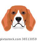 Illustration Dog Beagle 36513059