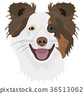 Illustration Dog Border Collie 36513062