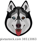 Illustration Dog Husky 36513063