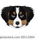 Illustration Dog Bernese Mountain Dog 36513064