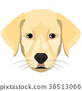 Illustration Dog Golden Retriever 36513066