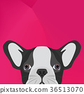 Illustration Dog English bulldog looking over wall 36513070