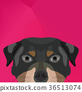 Illustration Dog rottweiler looking over wall 36513074