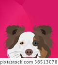博德牧羊犬 插图 狗 36513078