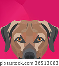 Illustration Dog Labrador looking over wall 36513083