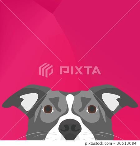 Illustration Dog Pitbull looking over wall 36513084