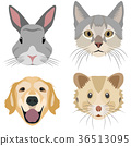 Collection of domestic animal heads 36513095