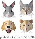 Collection of domestic animal heads 36513096