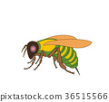 Cartoon fly, insect with bright colors. Housefly 36515566