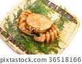 多毛的蟹食 36518166