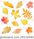 Set of autumn leaves isolated on white background. 36518484