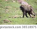 animal, animals, mammal 36518975
