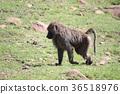 animal, animals, mammal 36518976