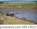 野生動物 野生生物 動物 36519022