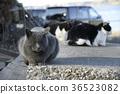 항구 지역 고양이들 36523082