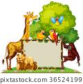 长颈鹿 狮子 鸟儿 36524199