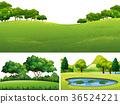 場景 草地 池塘 36524221