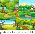 scene, farm, countryside 36525382