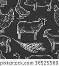 สัตว์,สัตว์ต่างๆ,นก 36525569