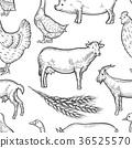 สัตว์,สัตว์ต่างๆ,นก 36525570