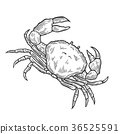 Crab Hand drawn 36525591