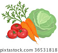 蔬菜 西紅柿 番茄 36531818