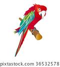 鹦鹉 鸟儿 鸟 36532578
