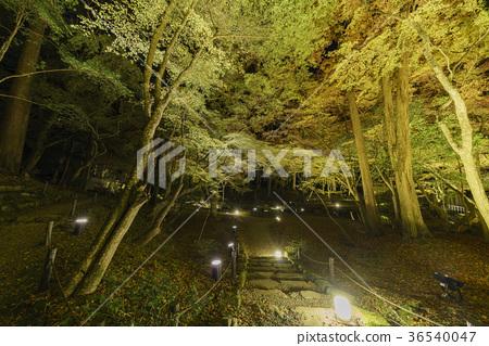 日本醍醐寺漂亮的夜景與楓紅 36540047