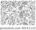Hand Drawn Pine Cones on White Background 36541132