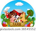 barn, cattle, cow 36545552