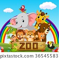 collection of zoo animals with guide 36545583