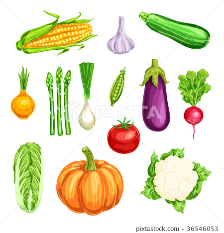 Vegetable watercolor icon of organic farm veggies 36546053